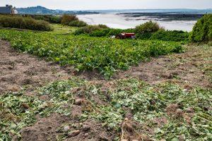 Gardening in Channel Islands