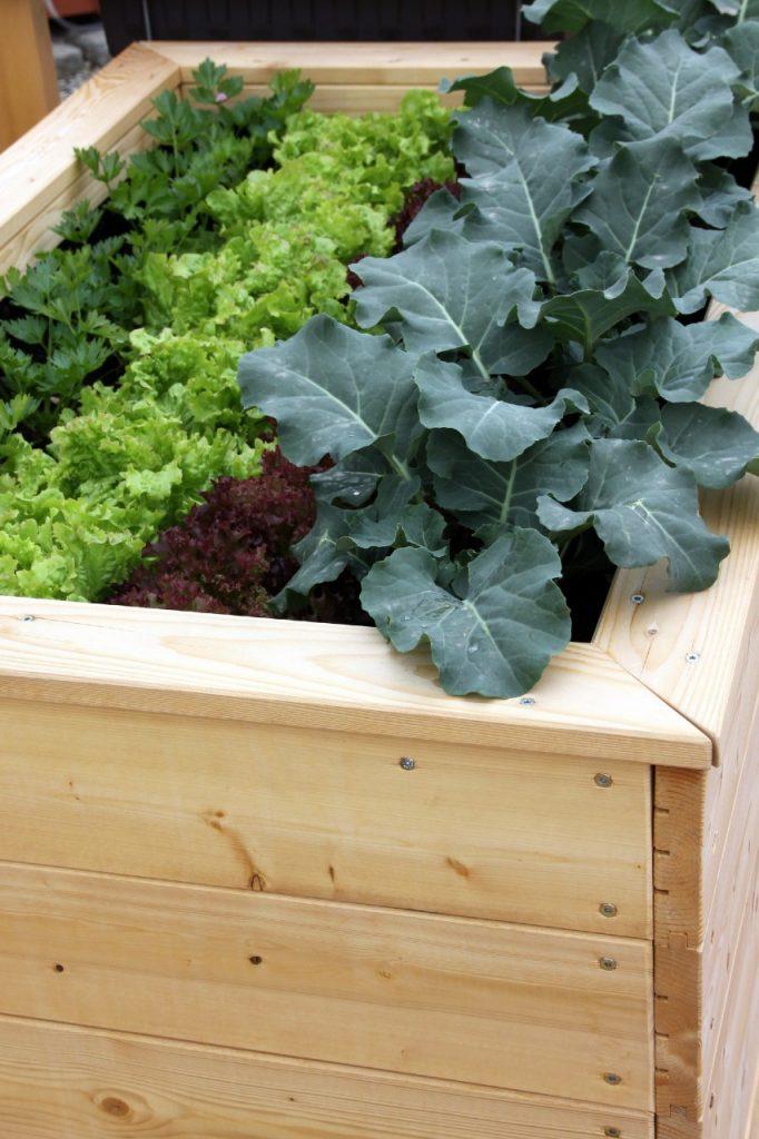 Raised bed gardening, Channel Islands