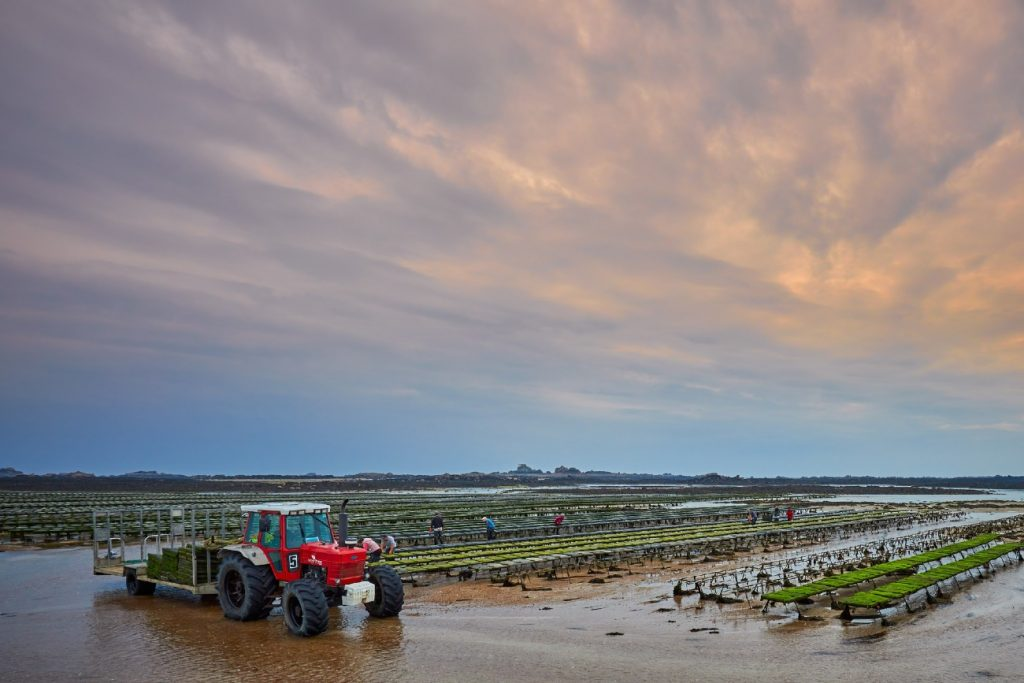 Oyster Farm Beds, St. Clements Bay, Jersey, Channel Islands