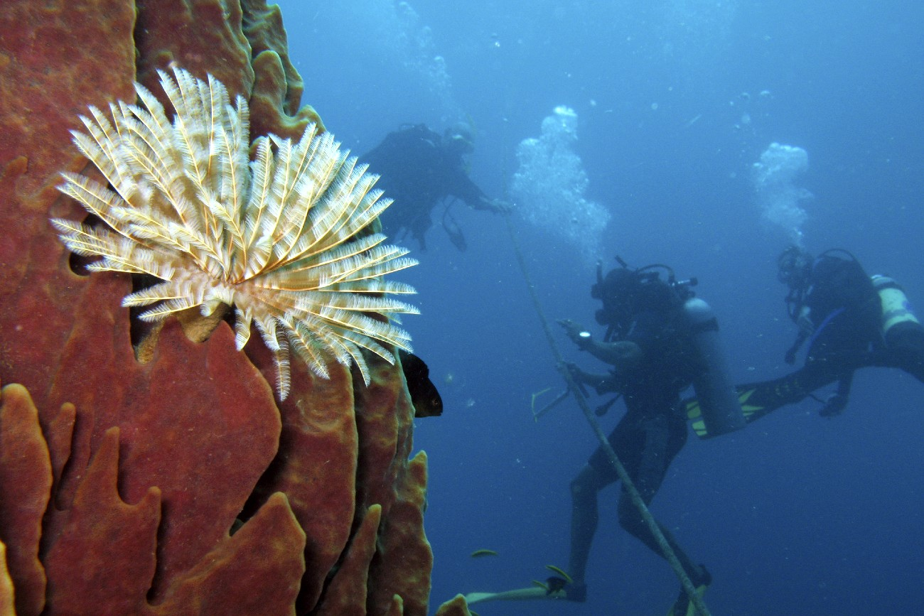 Tube worms, diving in the Channel Islands