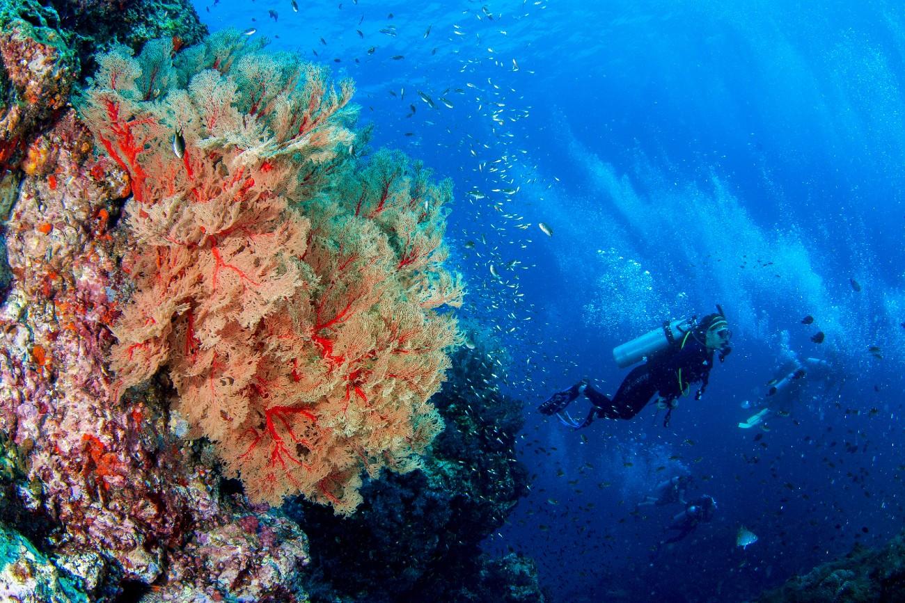 Scuba Diving in Jersey